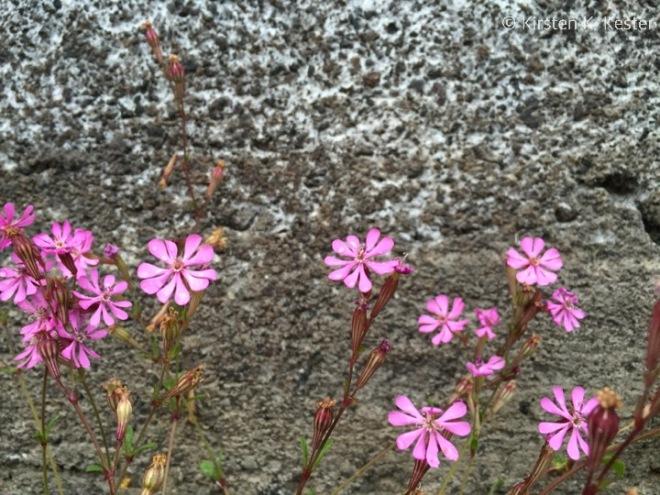 finurlige blomster © 2knald.com | Kirsten K. Kester